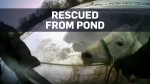 First responders save horse from frozen pond
