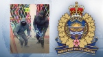 Police say these two individuals stole around $500K worth of electronics from a south Edmonton store early Friday morning.