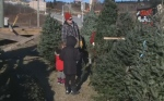 With Christmas just over a week away, sales have been strong at many Maritime Christmas tree lots.