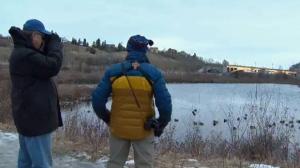 Audobon Society's Christmas bird count - Calgary