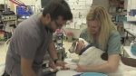 Millennials may be to blame for vet shortage