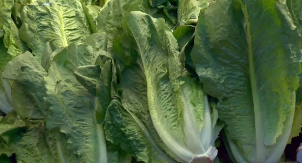 Romaine lettuce linked to deadly E. coli outbreak