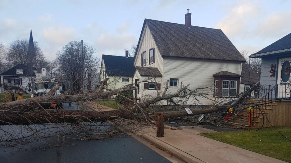 Fierce winds toppled trees across Nova Scotia on Christmas Day, including this one in the village of Milton. (Nova Scotia Power/Twitter)
