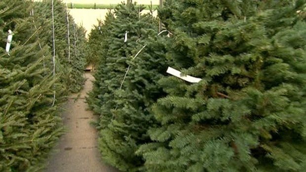 Christmas is over, but where to dispose of the tree