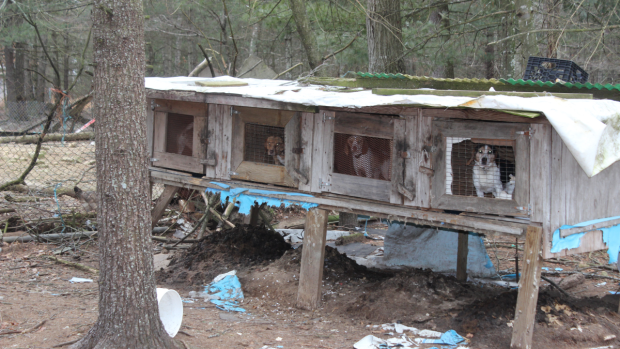 Man with 24 dogs left in cold arrested for animal cruelty
