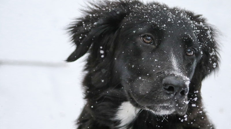 Look for signs if you're pet is too cold, such as shivering or trembling and slowed movements. (Pexels)