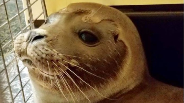 Seal pup rescued in Cape Cod