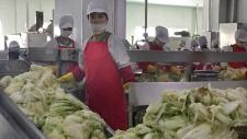 Workers prepare kimchi