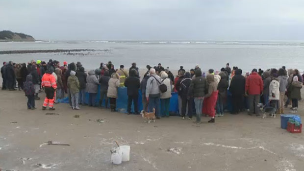 Dozens of locals gathered on the beach to help rescue the stranded whale.