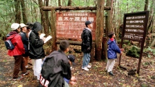 Aokigahara Forest, famous as a suicide spot