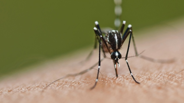 Mosquitoes test positive for West Nile Virus in Peel