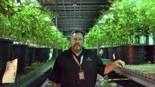 Andy Williams, founder, CEO of Medicine Man Denver