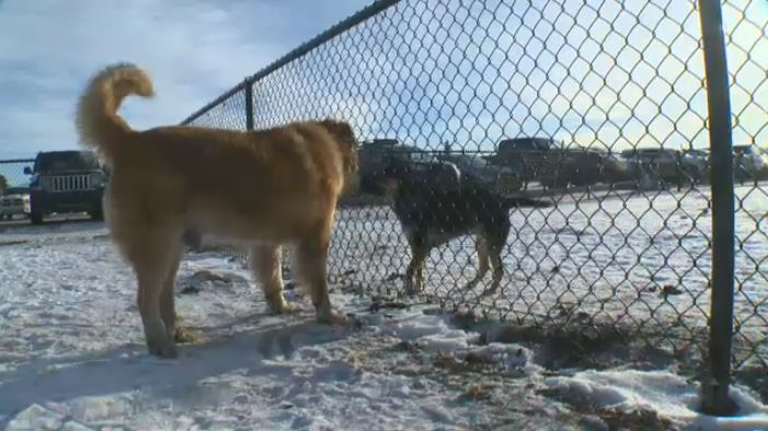 The Lauderdale Off-Leash Park has fences that separates small dogs from bigger dogs.