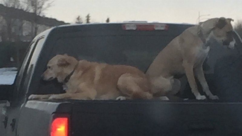 Joseph Dunbar and his fiancée spotted two loose dogs on top of the bed of a pickup truck. (Facebook)