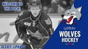 Sudbury Wolves welcome Alexey Lipanov