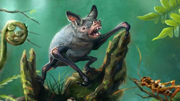Remains of extinct bat found in Otago