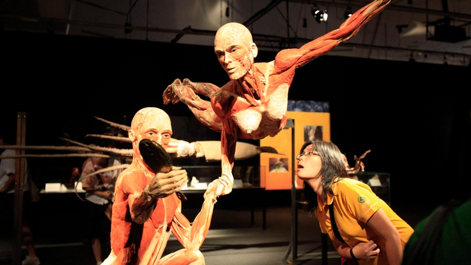 A woman examines an exhibit at a Body Worlds exhibit in Singapore on Monday, Oct. 26, 2009 in Singapore.  (THE CANADIAN PRESS/AP/Wong Maye-E)