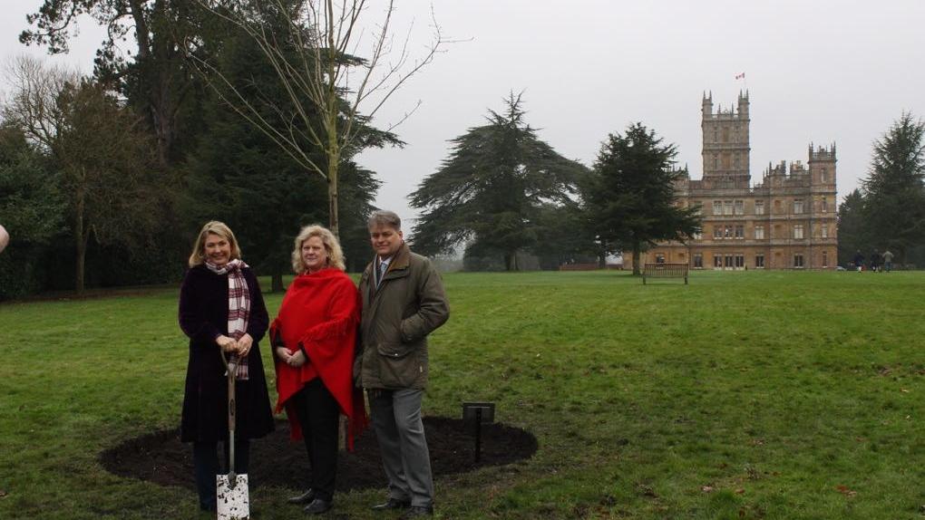 Downton Abbey maple tree