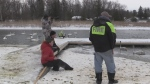 Search on for injured trumpeter swan