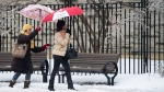 People take cover with their umbrellas as they look at the ice on tree branches as people make their way through rain and icy conditions as Toronto was hit by an ice storm in Toronto on Sunday, Dec. 22, 2013. (Nathan Denette / THE CANADIAN PRESS)