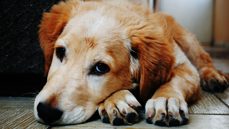 Winnipeg veterinarian Ron Worb said too much of the vitamin could even result in death. (Bruno Cervera/ Pexels).