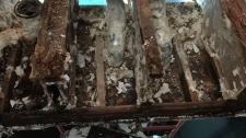 Mould and wood rot within Erlton duplex