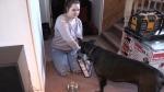 The food debate among pet owners