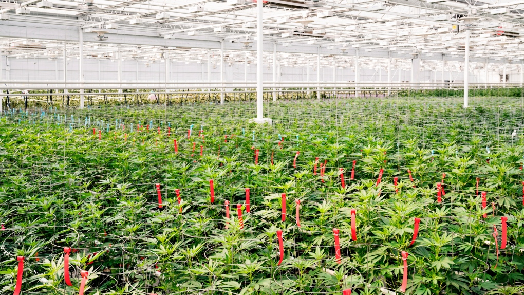 Aphria stock increases 15 per cent after announcing quarter profit