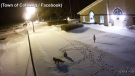 Caught on cam: Fox and snowy owl meet at night