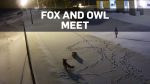 Owl and Fox