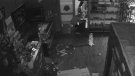 St. Albert RCMP released stills from surveillance footage showing three suspects breaking into the Cheap Smokes and Cigars Shop in Bellerose Dr. early Thursday, Jan. 11, 2018. Supplied.