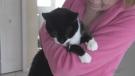 Catcalls greet feline registration program
