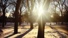 Stunning sunlight in the stillness of winter. Photo by Melissa Tokariwski.