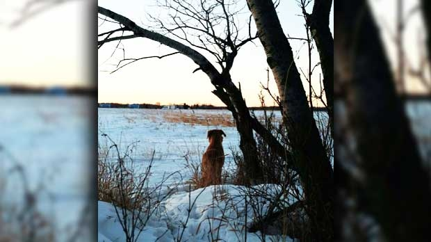 Holly always stops to take in the view as the sun was coming up. Photo by Drenna Campbell.