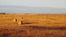 In this Oct. 19, 2010, photo, hay bales sit in prairie wheat fields outside Saskatoon, Saskatchewan. THE CANADIAN PRESS/AP-Rob Gillies