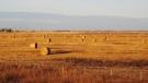In this Oct. 19, 2010, photo, hay bales sit in prairie wheat fields outside Saskatoon, Saskatchewan. THE CANADIAN PRESS/AP-Rob Gillies
