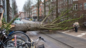 A man who escaped unharmed picks up his gloves after his scooter was hit by a crashing tree uprooted by heavy winds in Amsterdam, Netherlands, Thursday, Jan. 18, 2018. (AP Photo/Peter Dejong)