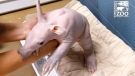 CTV News Channel: Baby aardvark isn't having it