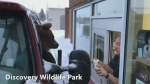 The province is now investigating a video of a bear, from the Discovery Wildlife Park, being taken through a fast-food drive thru.