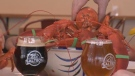 Saltbox Brewery in Mahone Bay is now fermenting its first batch of Crustacean Elation -- beer infused with lobster.