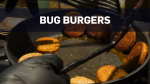 Sustainable burgers made out of bugs