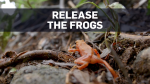 Endangered frogs released into forests of Panama