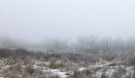 Fog at the Natural Grasslands Conservation Area, about 8 kilometers northeast of Saskatoon. (Courtesy: @Saskajanet)