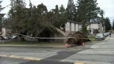 Wind storm tree