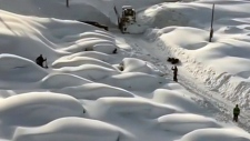 Cars buried, travellers trapped in B.C. snowstorm