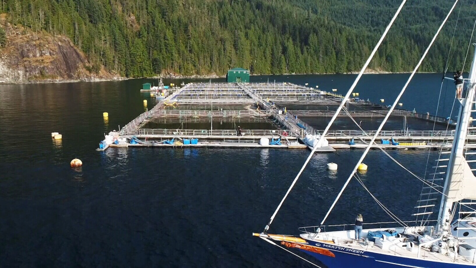 A fish farm is seen in B.C. in this undated file photo. (CTV Vancouver)