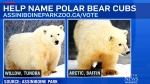 Zoo wants public to help name polar bears