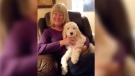 Darlene Nikkel suspects her 14-week-old labradoodle puppy named Molly was stolen from inside her husband's parked car near a Surrey Tim Hortons on Jan. 22, 2018.