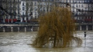 A flooded tree is pictured in Paris, Tuesday, Jan.23, 2018. (AP Photo/Thibault Camus)