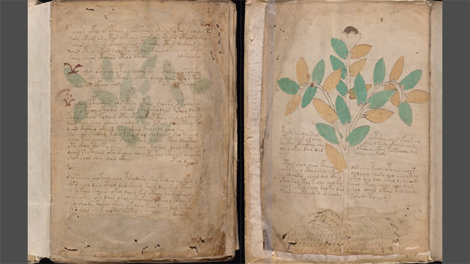Pages from the Voynich Manuscript. (Credit: Beinecke Rare Book and Manuscript Library, Yale University)